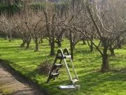 Обрезка плодовых деревьев. Посадка саженцев..